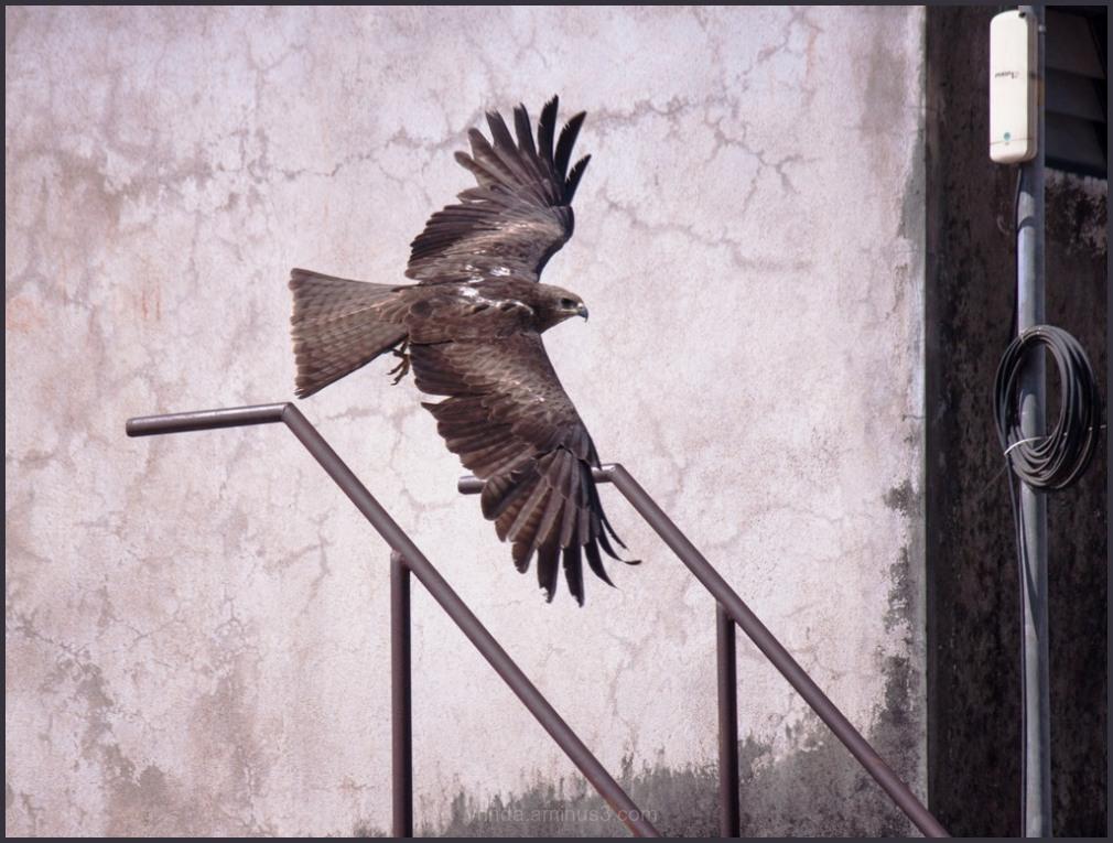 free bird?