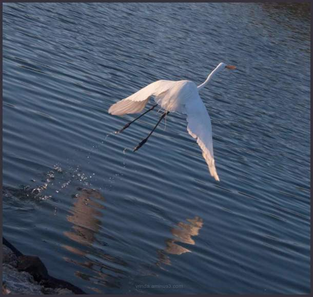 Splash take-off