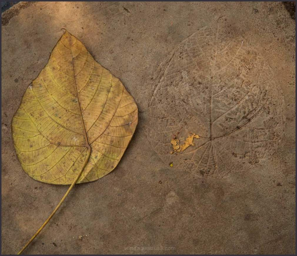 The lost leaf