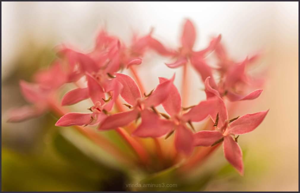 Floral musings-1