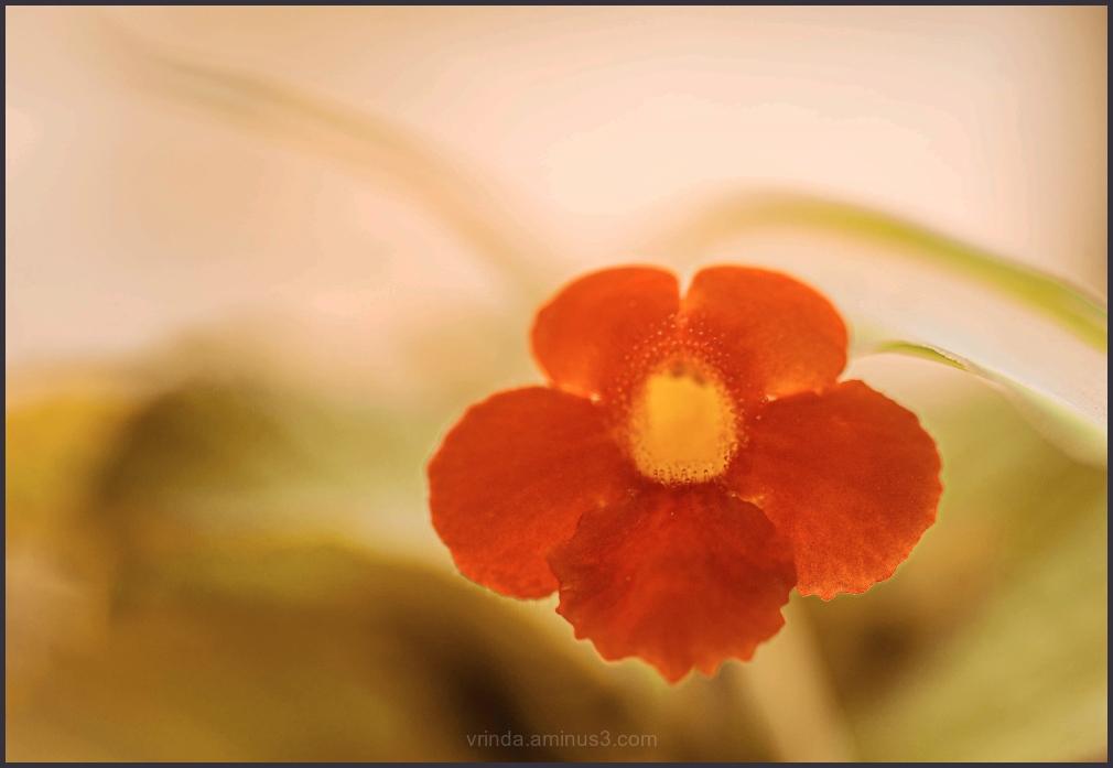 Floral musings - 2