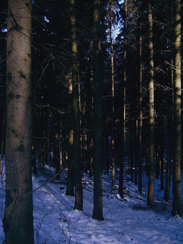 salgótarján woods