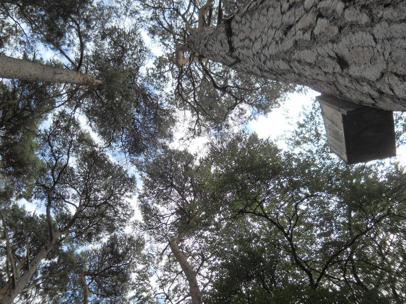 Trees and nesting box, brownsea island.