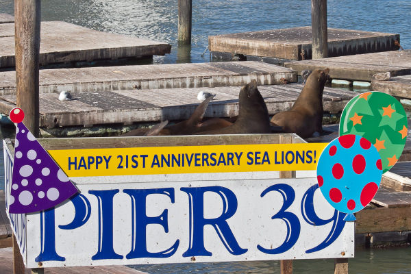 Party on Pier 39
