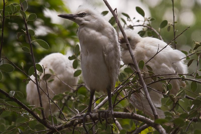 some birds 5/6