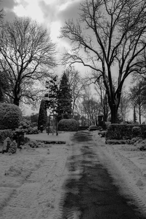 winter impressions I