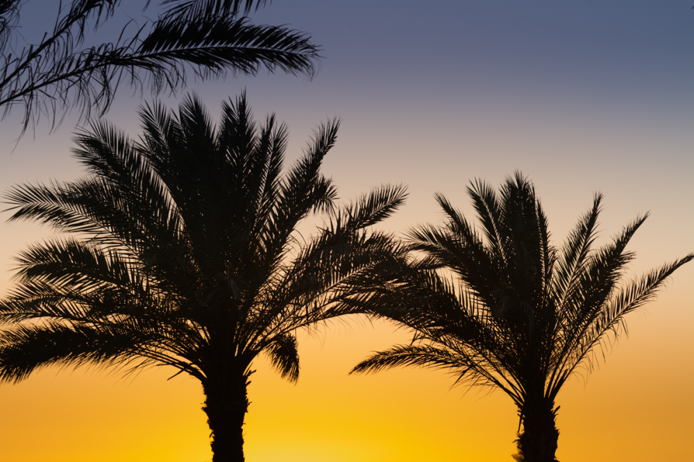 palm kitsch