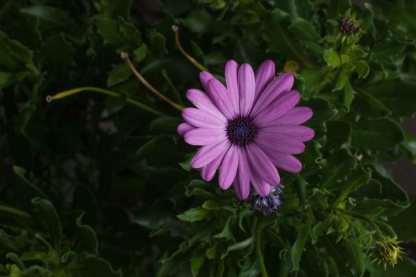 summer, garden, green 3