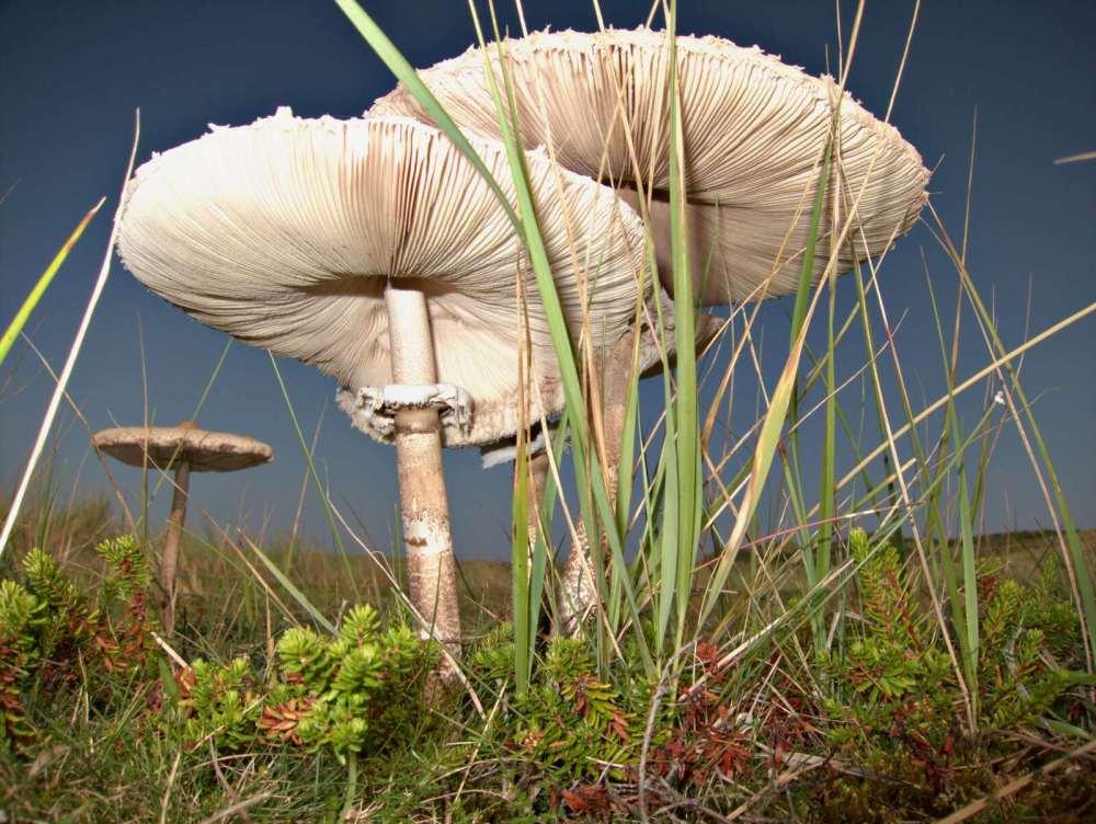 Nature's umbrellas