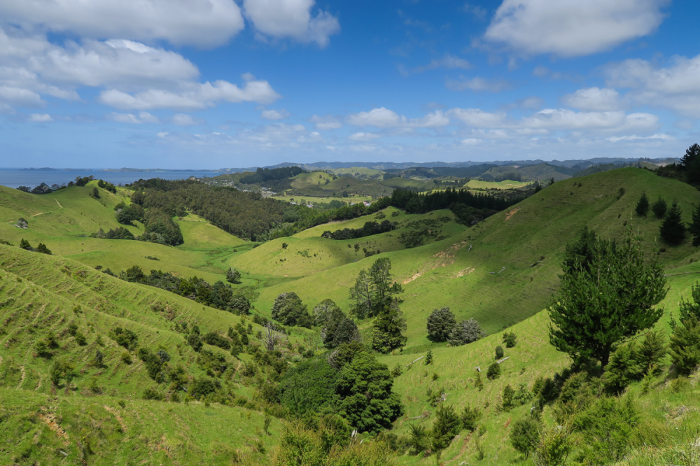 New Zealand Green 1