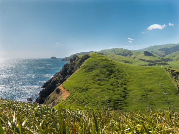 New Zealand Green 3