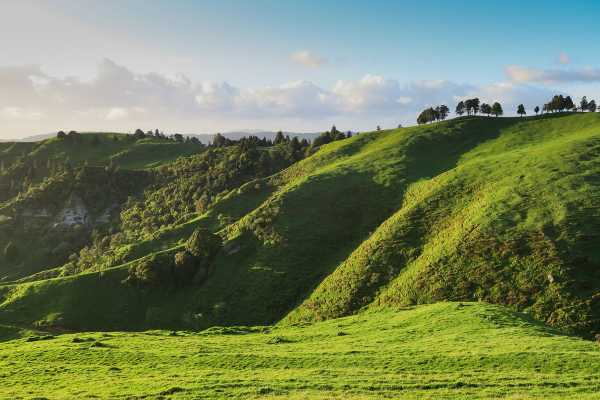 New Zealand Green 4