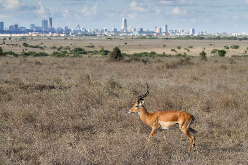 Wildlife meets city I