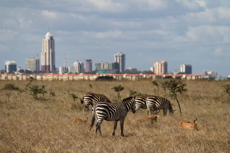 Wildlife meets city II