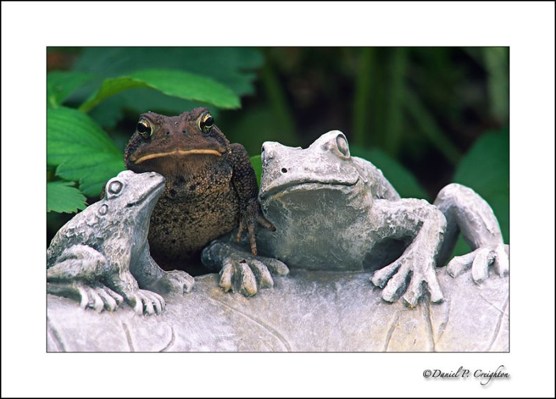 Toad and toad statue, love concept
