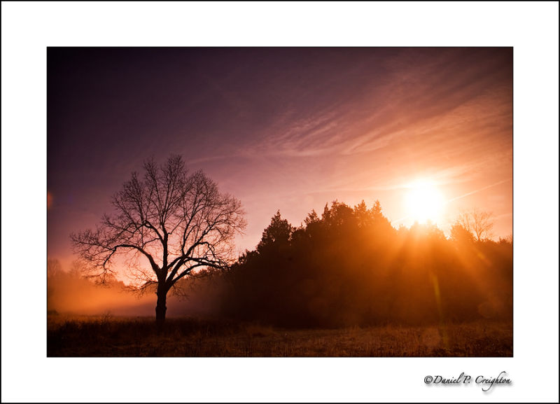 Tree at sunrise in Green Lane Park, PA