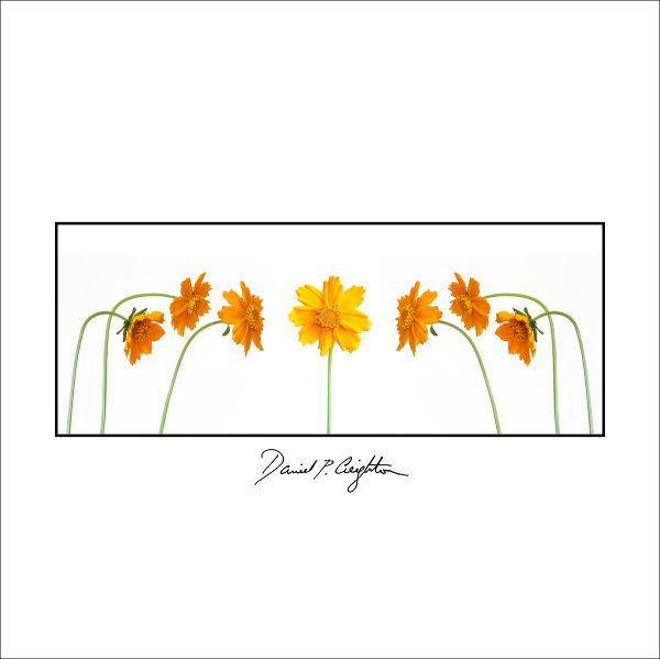 concept image of flowers