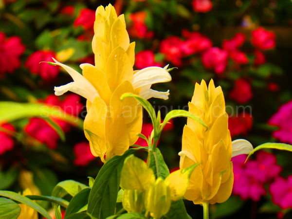 Sublimity Exemplified - Flowers 2