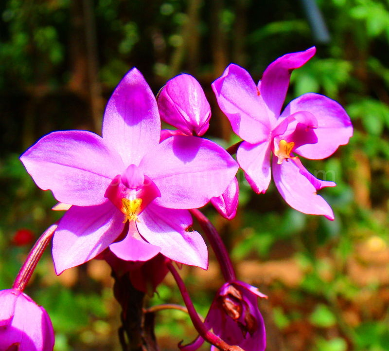Sublimity Exemplified - Flowers 10