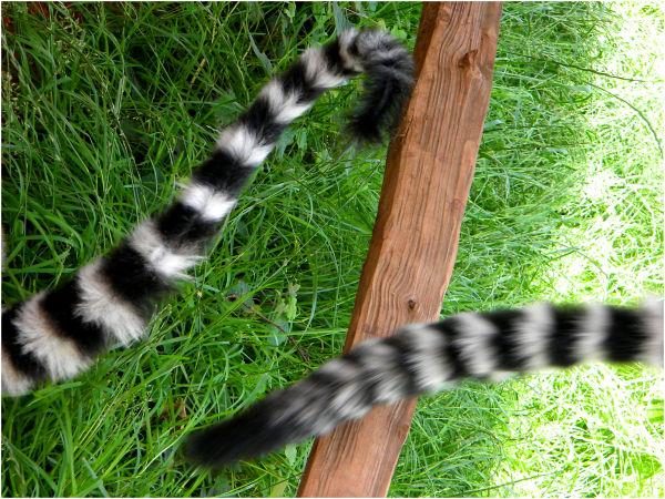 tail'bearers...