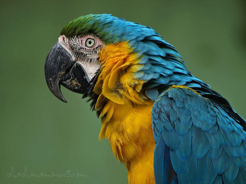 parrot at Tama Zoo