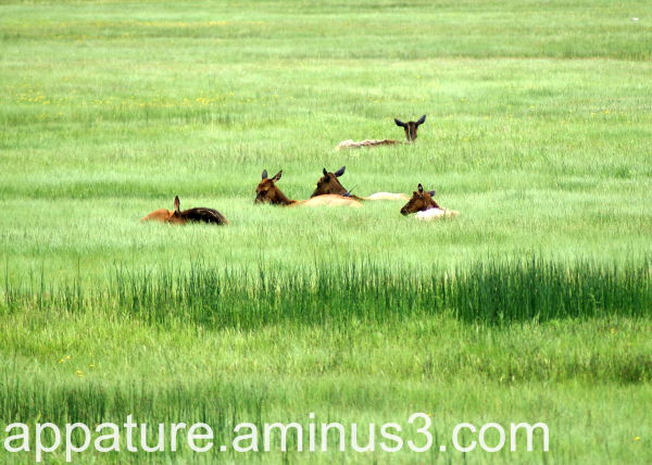 Deer grass Yellowstone