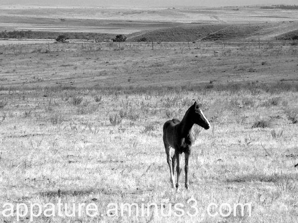 Mustang   Foal    Land
