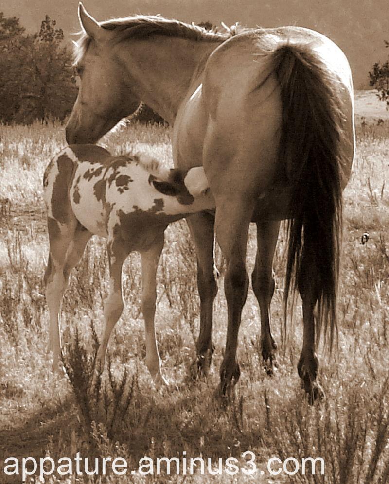 Wild Mustang Mare  Foal