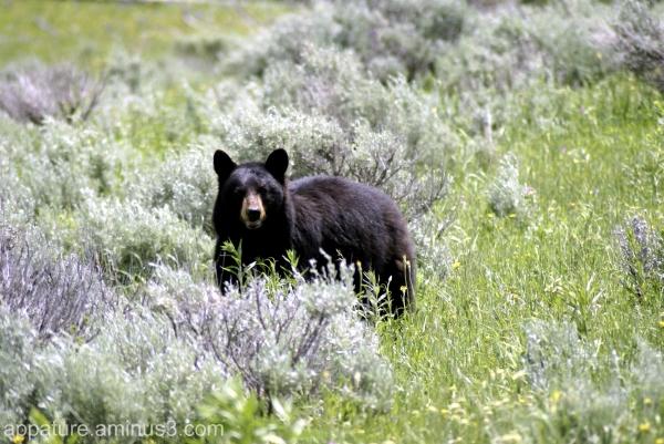 Grass Bear