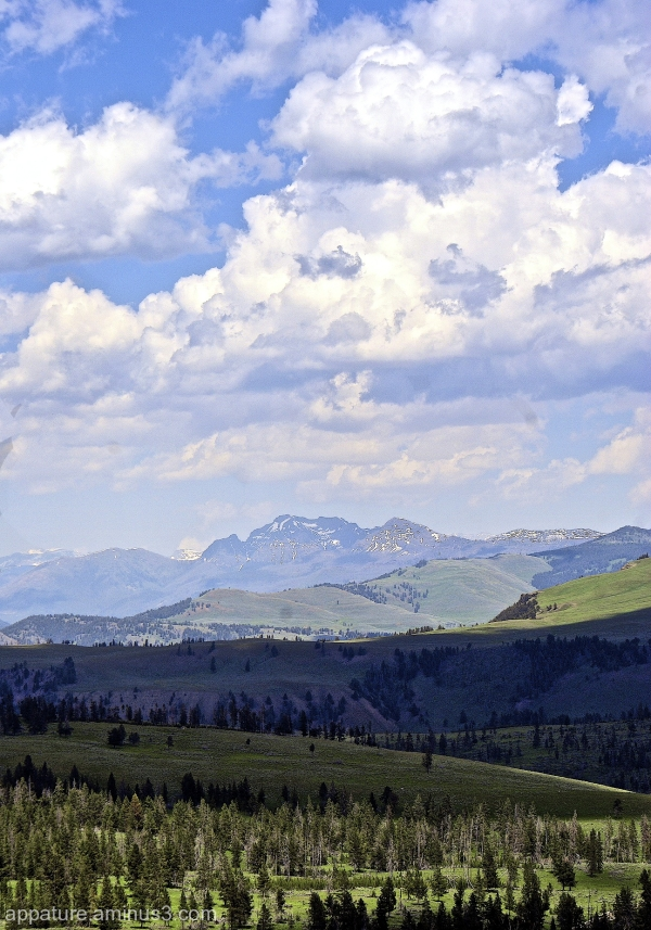 Mountans  fields    Yellowstone