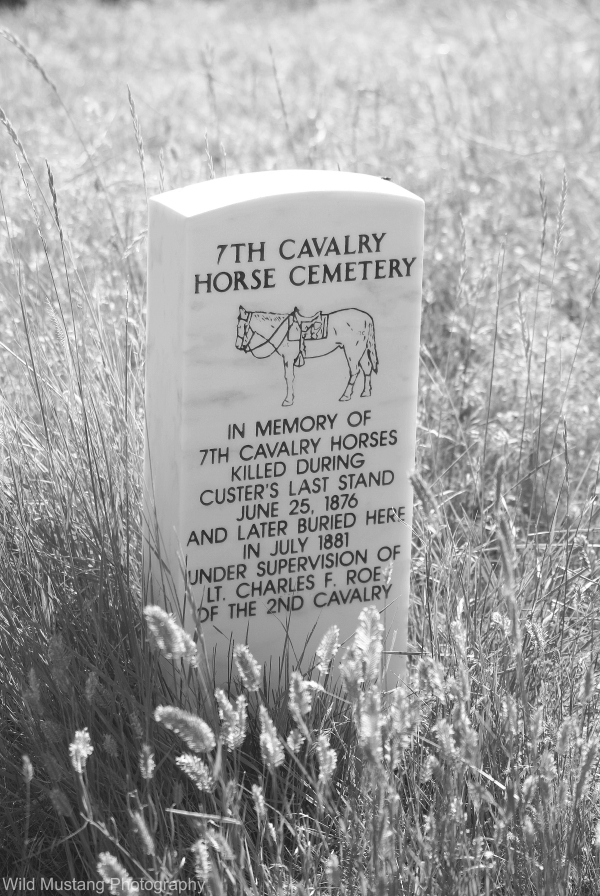 Horse Grave
