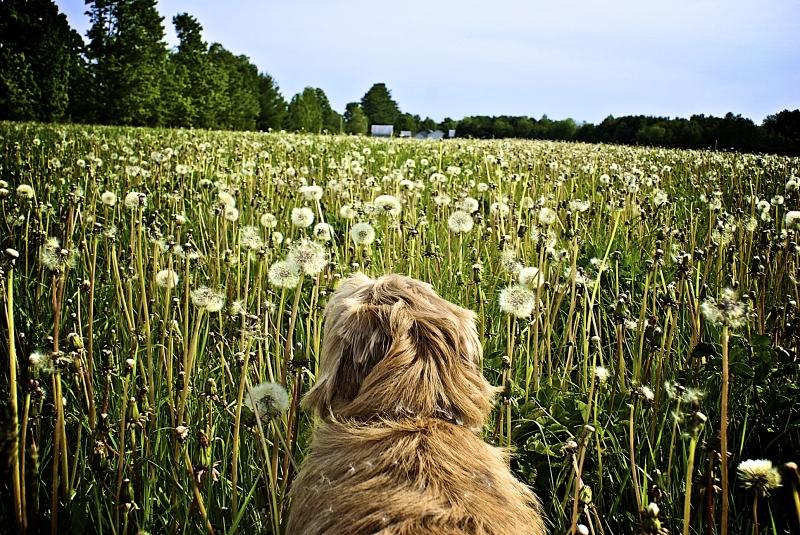 Dog field