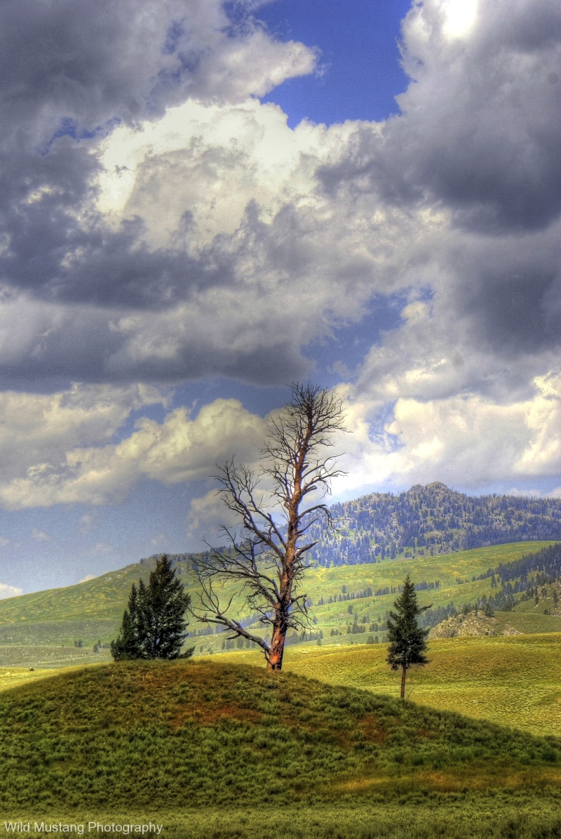 Yellowstone National Park,Hill   tree clouds HDR