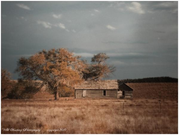 abandoned house  prairie   tree