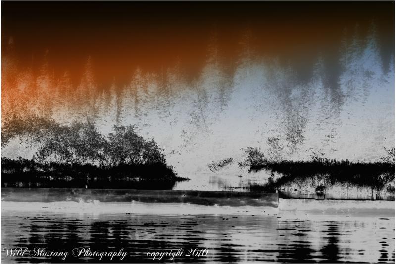 Trees  river sky