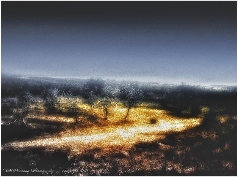 trees   prairie