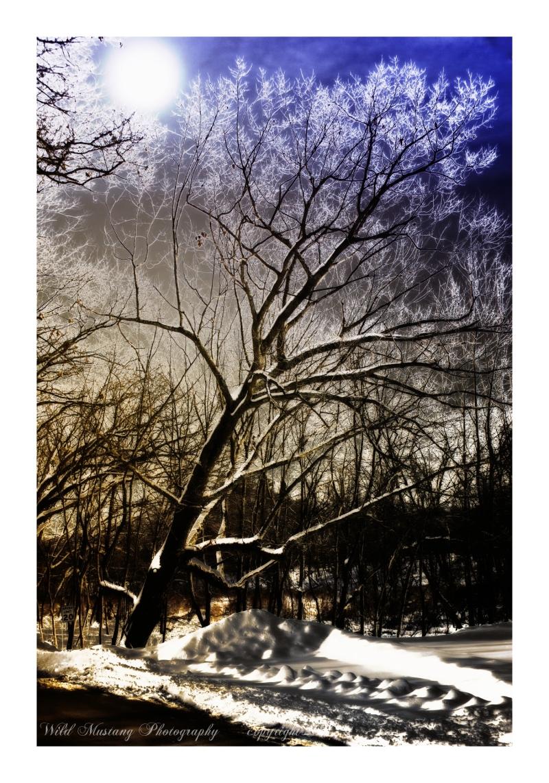 Moon   Tree  Snow