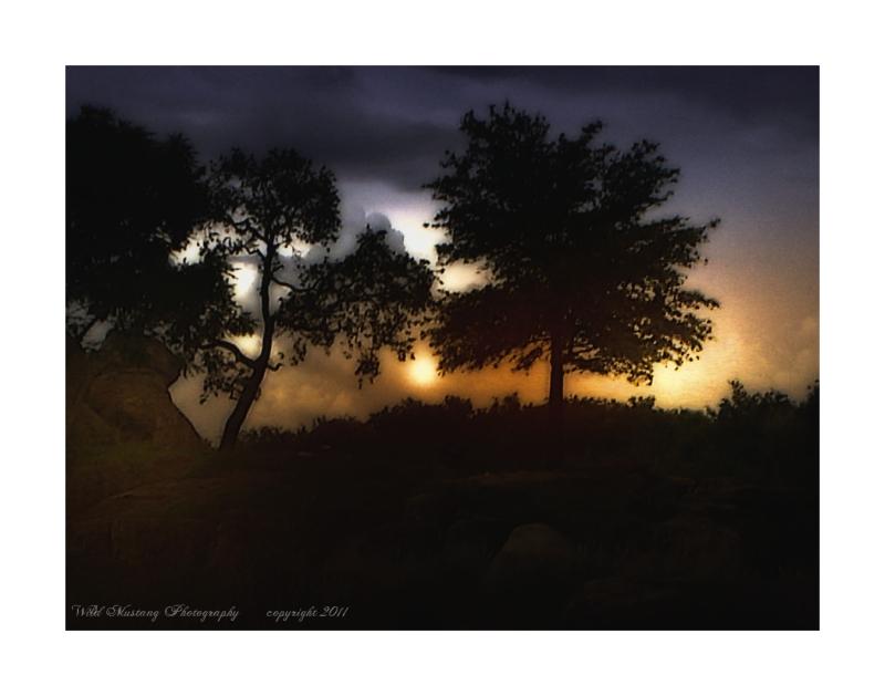 sun   trees   rocks
