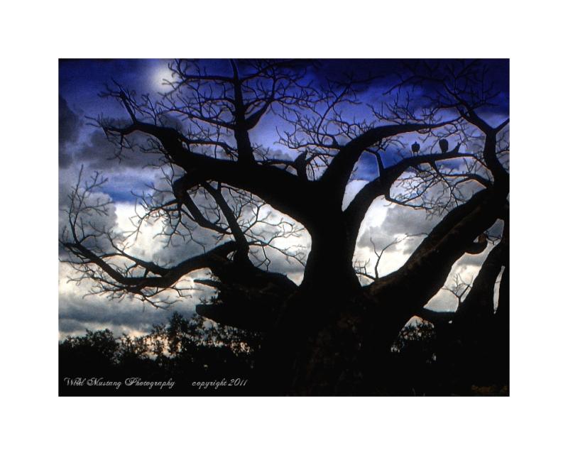 Tree   moon   trees    sky