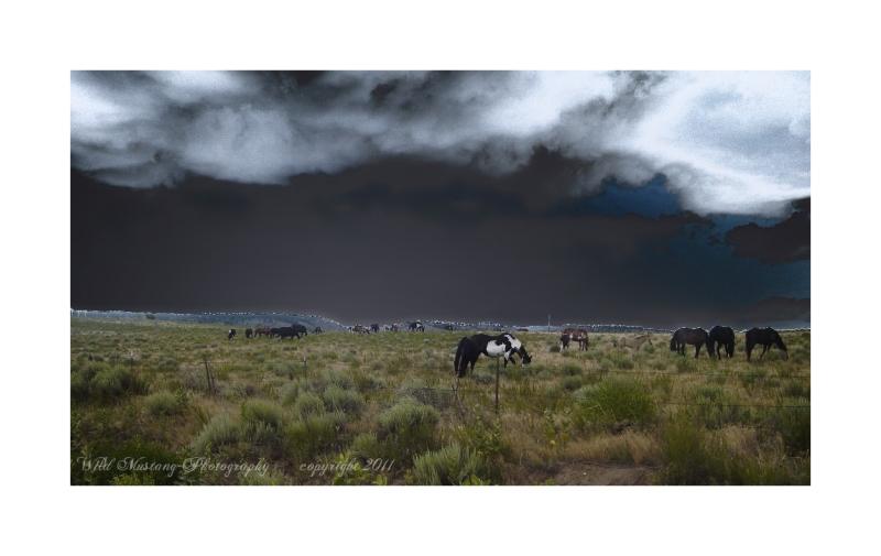 Wild Horses   grasses   clouds