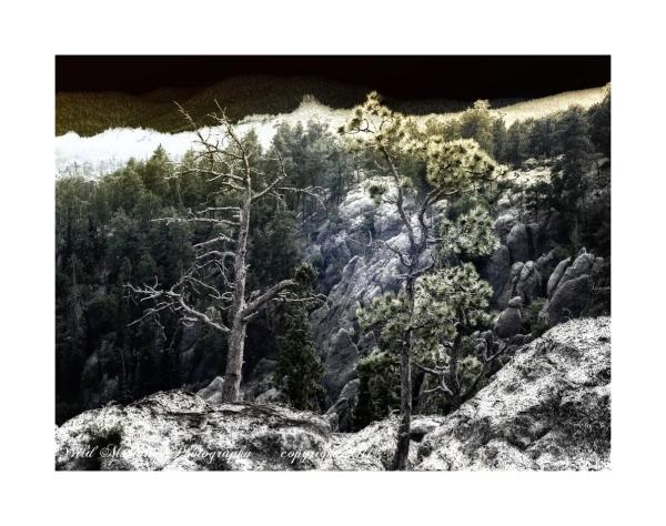 Trees ,rocks  grasses