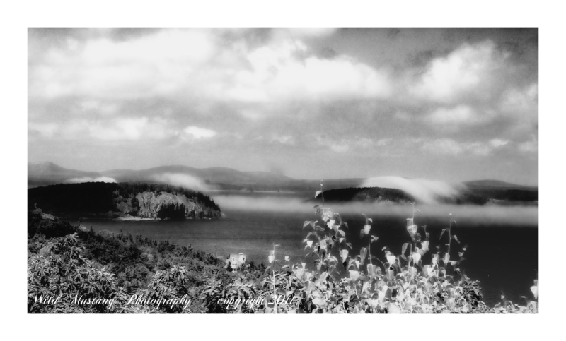 ocean   hills   fog