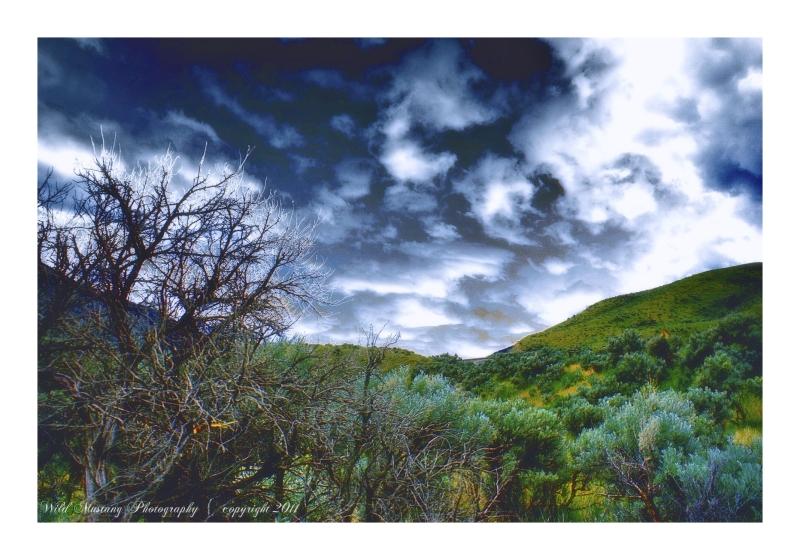 Wild Sage, clouds, shrubs