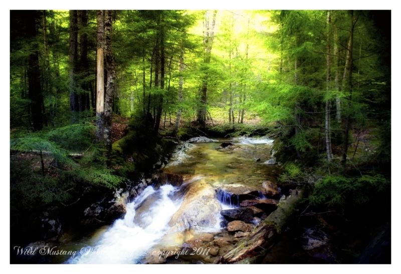 water,rushing river,trees, rocks
