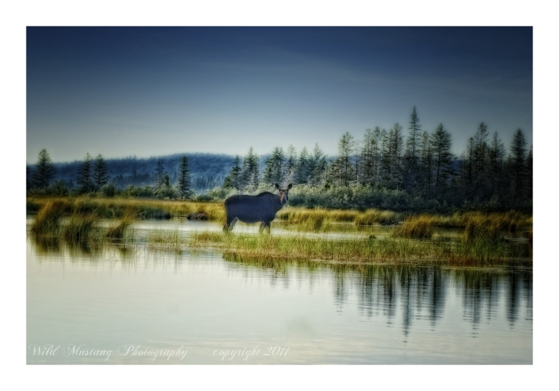 water    moose    grasses