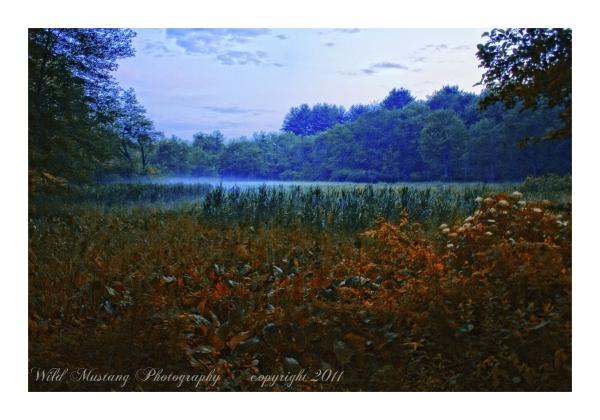 Fog, woods, trees, grasses