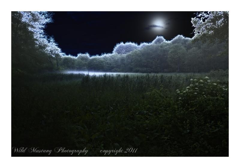 moon, fog, field, flowers