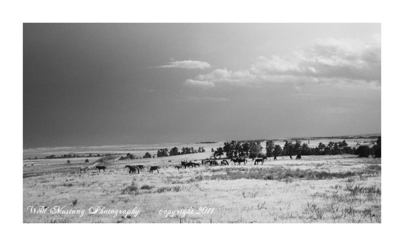 Horses, Prairie, clouds
