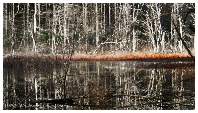 water ,trees, birch
