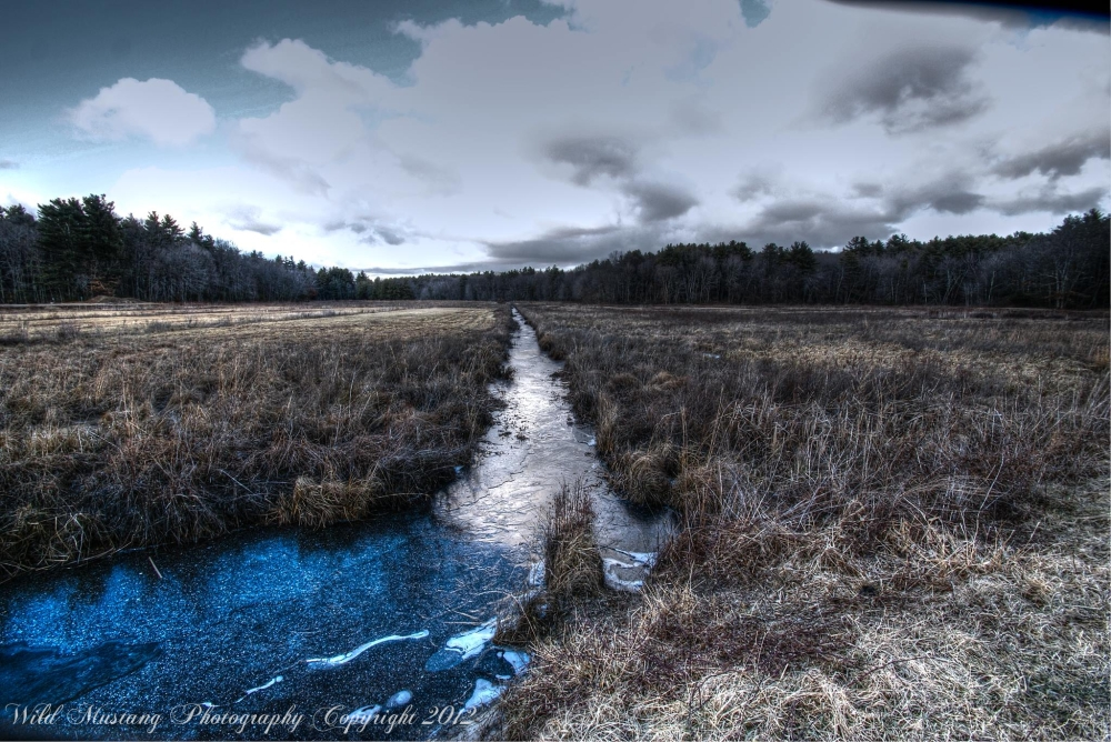 Grasses, water, clouds, Bog